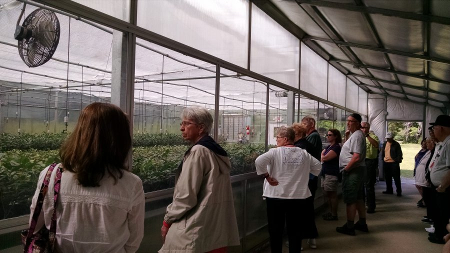 Charleston Tea Plantation, greenhouse, Southern Hospitality 2016