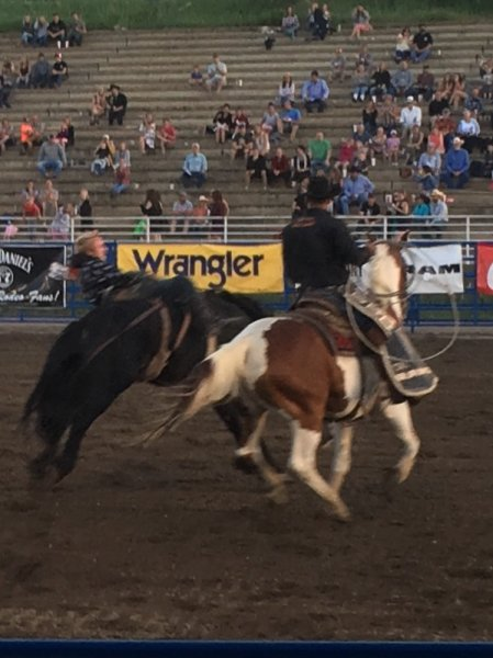 Rodeo Steamboat Springs