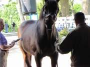 Kentucky Horse Park: Go for Gin